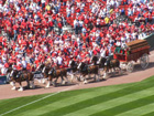 The Busch Clydesdales make their way around the new Busch Stadium